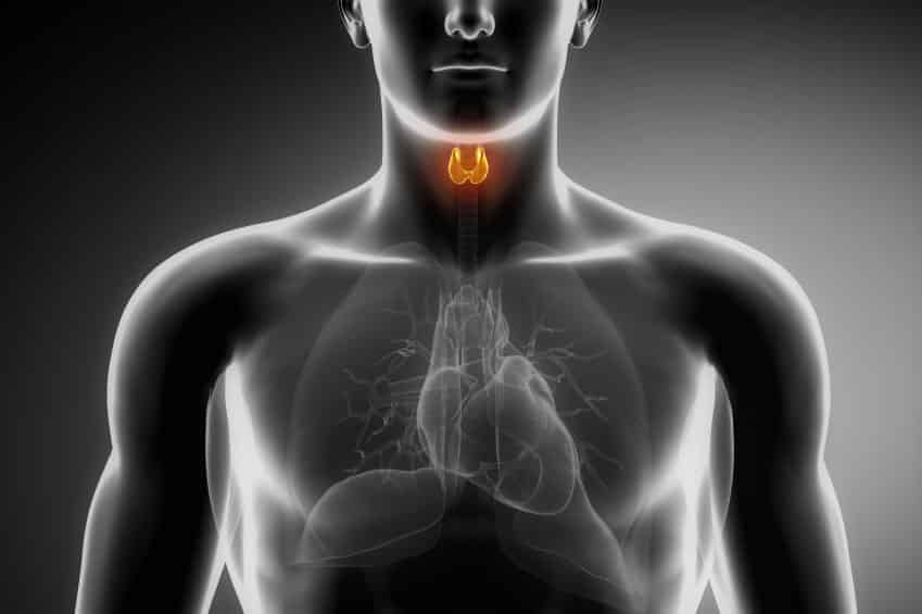 Hashimoto's and Thyroid Primer