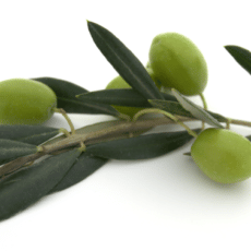 EBV and Olive Leaf Extract